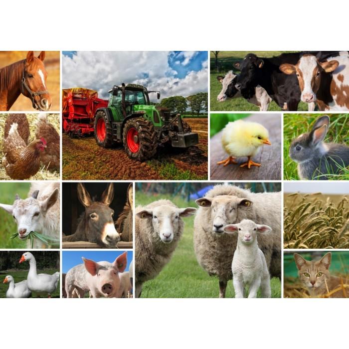 Collage - Farmyard Animals