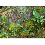 Puzzle  Grafika-T-00552 François Ruyer - Jungle