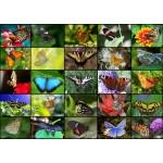 Puzzle  Grafika-T-00622 Collage - Butterflies