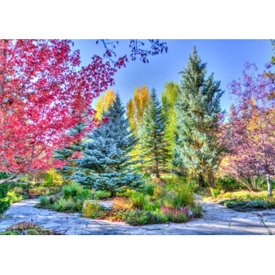 Puzzle Grafika-T-00854 Colorful Forest, Colorado, USA
