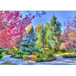 Puzzle  Grafika-T-00854 Colorful Forest, Colorado, USA