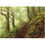 Puzzle  Heye-29519 Magic Forest: The Path
