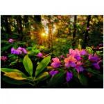 Puzzle  Heye-29662 Marc Adamus : Rhododendron
