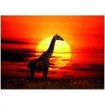 Puzzle  Heye-29688 Alex Bernasconi: Sunny Giraffe