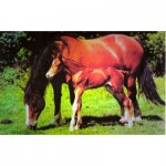 Puzzle  James-Hamilton-Foal Mare and Foal