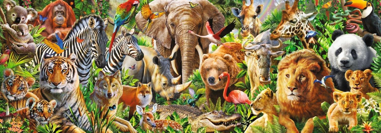 картинки про животных на одной картинки много