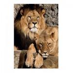 Puzzle  Jumbo-18341 Lions