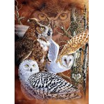 Puzzle  Jumbo-18346 Find the Owls