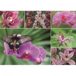 Puzzle  Jumbo-18354 Orchids