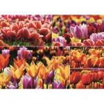 Puzzle  Jumbo-18364 Tulips