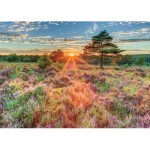 Puzzle  Jumbo-18524 Heather at Sunset