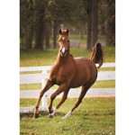 Puzzle  Jumbo-18538 Horse