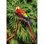 Puzzle  KS-Games-10111 Scarlet Macaw