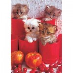 Puzzle  KS-Games-11169 Cherry Cats