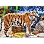 Puzzle   Amazing Tiger