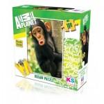 Puzzle   Baby Chimp