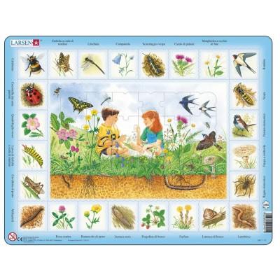 Larsen-NA1-IT Frame Jigsaw Puzzle - Farfalla a coda di rondine