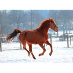 Puzzle  Nathan-86908 Horse in the Snow