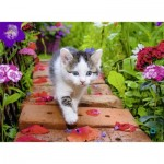 Puzzle  Nathan-87185 Kitten