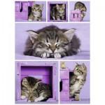 Puzzle  Nathan-87227 Kitten