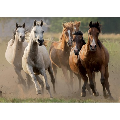 Nathan-87561 Jigsaw Puzzle - 1000 Pieces - Herd of Wild Horses