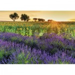 Puzzle  Nathan-87575 Fields of Provence