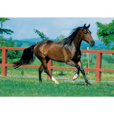 Nathan-87688 Jigsaw Puzzle - 1500 Pieces - Trotting Horse