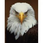 Puzzle   Bald Eagle Mini