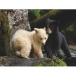 Puzzle   Bear Buddies