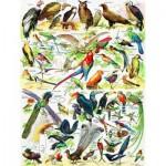 Puzzle   Birds - Oiseaux