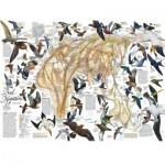 Puzzle   Eastern Bird Migration