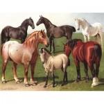 Puzzle   Horse Breeds