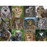 Puzzle   Owls and Owlets