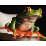Puzzle   Red-Eyed Tree Frog Mini
