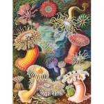 Puzzle   Vintage Images - Sea Anemones