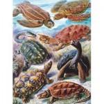 Puzzle   Vintage Images - Turtles