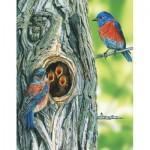 Puzzle   Western Bluebird Mini