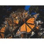 Puzzle   XXL Pieces - Monarch Butterflies