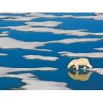 Puzzle   XXL Pieces - Polar Bear on Ice