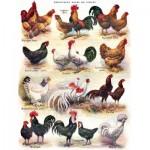 Puzzle   XXL Pieces - Poules - Poultry