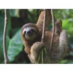 Puzzle   XXL Pieces - Three Toed Sloth