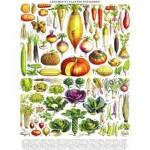 Puzzle  New-York-Puzzle-PD635 Vintage Images - Vegetables