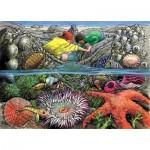 Cobble-Hill-58805 Frame Puzzle - Exploring the Seashore