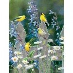 Puzzle  Cobble-Hill-85037 XXL Jigsaw Pieces - Susan Bourdet - Goldfinch Quartet