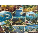 Puzzle   Fish Pics