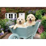 Puzzle  Perre-Anatolian-3310 Puppies in a Wheelbarrow