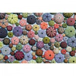 Puzzle  Piatnik-5488 Colorful Sea Urchin