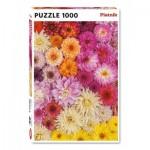 Puzzle   Dahlias