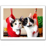 Pintoo-H1387 Plastic Puzzle - Christmas kittens