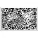Pintoo-H1548 Plastic Puzzle - Extrême Puzzle : Leopards
